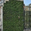 The Green Wall grows at The Rubens at the Palace